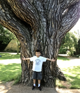 A boy and a big black pine in Oxford, 2012.