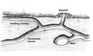 kg23-mole-tunnel_xl